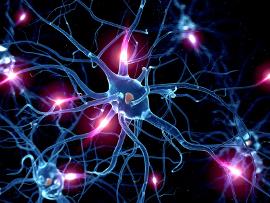 Neuronenbahnen und Synapsen - ein Gehirn baut sich um